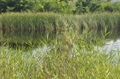 Lake. Beautiful and nice lake Stock Photo