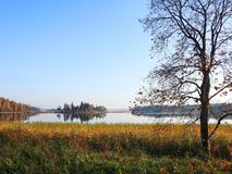 Lake and beautiful plants, Lithuania stock photos