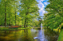 Lake with beautiful white swans in Keukenhof park, Lisse, Holland Royalty Free Stock Images