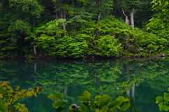 Lake in beech forest Royalty Free Stock Photos
