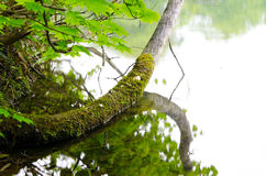 Lake in beech forest Stock Photography