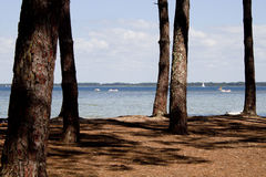 Lake behind some trees with pedal boats Royalty Free Stock Photo