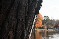 Lake behind the trees during the autumn royalty free stock photos