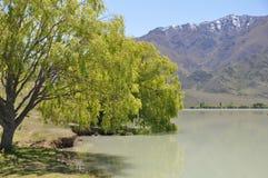 Lake Benmore shore Stock Photography