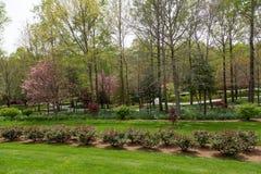 Lake Beyond Rose Garden Royalty Free Stock Photos