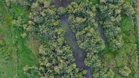 Lake with big trees. Aerial shot big lake with big trees stock video footage