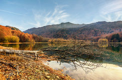 Lake Biograd (Biogradsko jezero), Biogradska Gora national park. In autumn, Montenegro Stock Images
