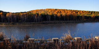 Lake and birch forest in the morning light Stock Photos