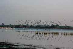 Lake birds reflection at Nalsarovar. Royalty Free Stock Images