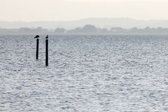 Lake and birds. Two seagulls on poles on a lake, with distant hills in the background, and very soft colors, mostly white and light blue stock photo