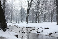 Lake with birds in winter Stock Images