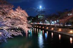 Lake biwa canal with sakura Royalty Free Stock Images