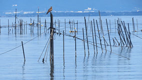 Lake Biwa nel Giappone Fotografie Stock Libere da Diritti