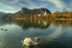 Lake Bled, castle Bled and church St. Marina -  autumn picture Stock Images