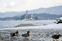 Lake Bled, Bled, Slovenia Stock Photo