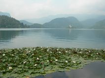 The lake of Bled royalty free stock photo