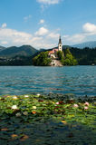 Lake Bled in Slovenia. View of  St. Mary´s Church of the Assumptionon in Bled Royalty Free Stock Photo