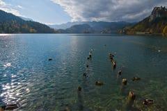 Lake Bled Royalty Free Stock Photos