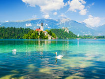 Lake Bled with swan, Slovenia, Europe. Lake bled and alps in slovenia Stock Photos