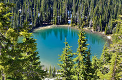 Lake with blue-green water surrounded by evergreen trees. Lake with blue-green water surrounded by evergreen pine trees in a forest royalty free stock images