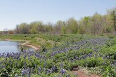 Lake bluebonnets. Lake and bluebonnets in Washington County, TX Stock Photos