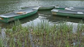 Lake Boat near the Cattail. Pan shot to some old lake boats moored on the cattail shore stock video footage