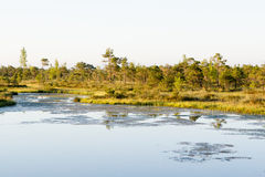 Lake in a bog Royalty Free Stock Image