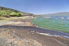 Lake Bogoria, Kenya. Lake Bogoria shore in Kenya, the water is green from algae Stock Photography