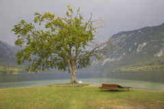 Lake Bohinj Royaltyfria Foton