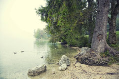 By Lake Bohinj Slovenia Stock Photos