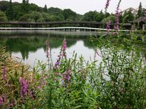 Lake Bridge, Purple Flowers. A lake bridge with purple flowers in the foreground, part of a beautiful garden scene royalty free stock photography