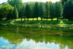 Lake bridge. Tree water thicket Royalty Free Stock Image