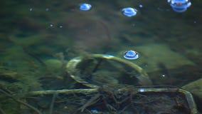 Lake bubbles spring season nobody hd footage. Day light stock video