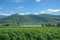 Lake Caldaro near Merano, Italy. Vineyard at Lake Caldaro or Kalterer See near Merano and Bolzano, South Tyrol, Trentino, Alto Adige, Italy stock photos