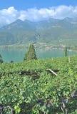 Lake Caldaro,South Tirol,Italy Royalty Free Stock Images