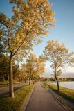 Lake Calhoun Minneapolis. Fall at Lake Calhoun Minneapolis Royalty Free Stock Images