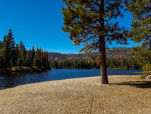 Lake in California. Lake surrounded by woods in California Stock Photos