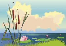 Lake cane and lotuses Royalty Free Stock Photo