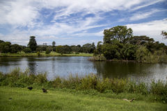 Lake in Centennial park. This is one of the lakes inside Centennial park, Sydney Stock Photography
