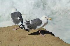 Huntington Beach Central Park Royalty Free Stock Photos
