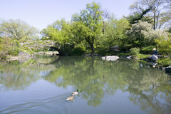 Lake in Central Park in Spring with two ducks in view, New York City, New York Royalty Free Stock Photo