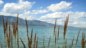 Lake Chagytay in Tuva. Siberia. Royalty Free Stock Photo