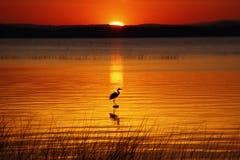 Free Lake Champlain Hunting Heron At Sunrise Royalty Free Stock Photos - 18434418