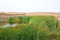 Lake at Chan Chan. Lake and reeds at Chan Chan archaeological site royalty free stock images