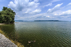Lake Chiemsee, Germany. The Chiemsee with greylag geese during the spring Royalty Free Stock Photo