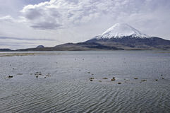 Lake Chungara. Chile Royalty Free Stock Photo
