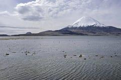 Lake chungara. Chile. Chungara Lake and Parinacota volcano in the Lauca National Park. Chile Royalty Free Stock Photo