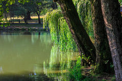 Lake in a city park. Trees on the shore of the lake in a city park Royalty Free Stock Photography