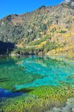 Lake with clear water at Jiuzhaigou Royalty Free Stock Image