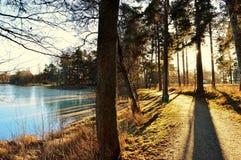 Lake coast Stock Images